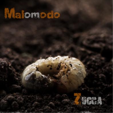 Malomodo-Zucca